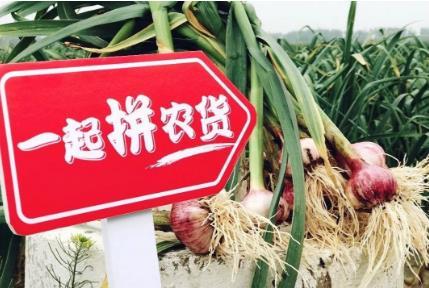 """拼多多""""造節""""加速農貨上行 預計成交超1億單"""