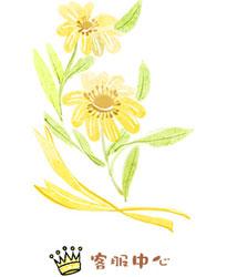 黄色水彩花朵